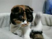 Cannocat