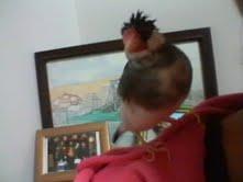 Cannobird